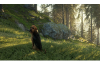 theHunter: Call of the Wild - Bloodhound (DLC)